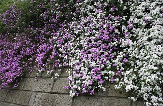 050513_flowers1