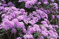 050513_flowers2